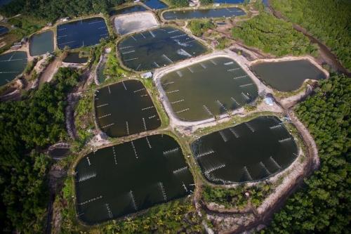 Креветочная ферма в Таиланде