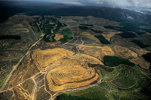 Пальмовые плантации, Малайзия