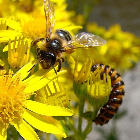 исчезновение пчёл