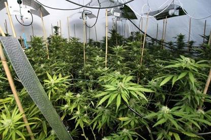В Канаде бункер с марихуаной