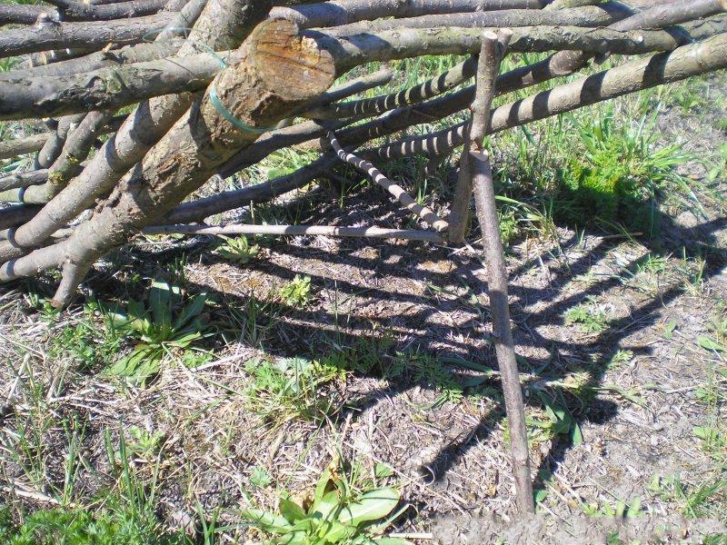 Фото ловушки для фазанов своими руками 94
