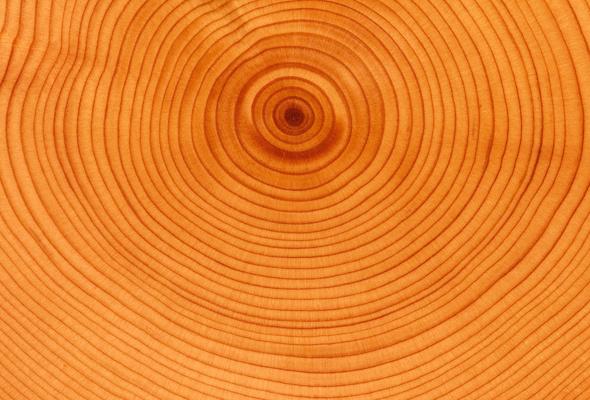 drevesina-pro100_0